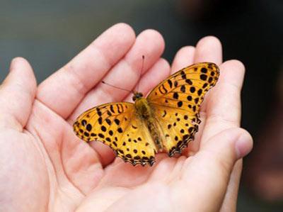 Un papillon pour symboliser les soins reiki à distance que donne Fanny dans son espace vert de la Guadeloupe
